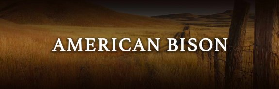 American Bison Knowledge - Learn about American Bison